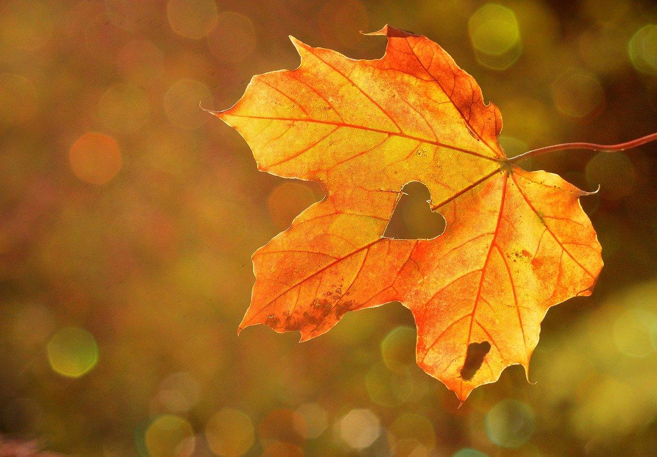 Есенна оферта в Троян Плаза 4*, гр. Троян