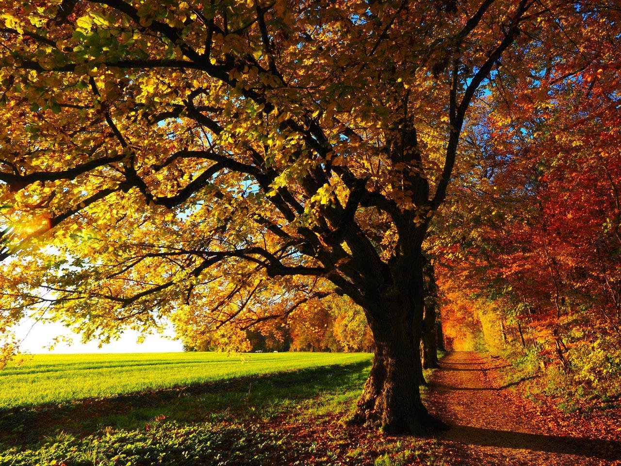 Есен в Троянския Балкан - хотел Шато Монтан 3*