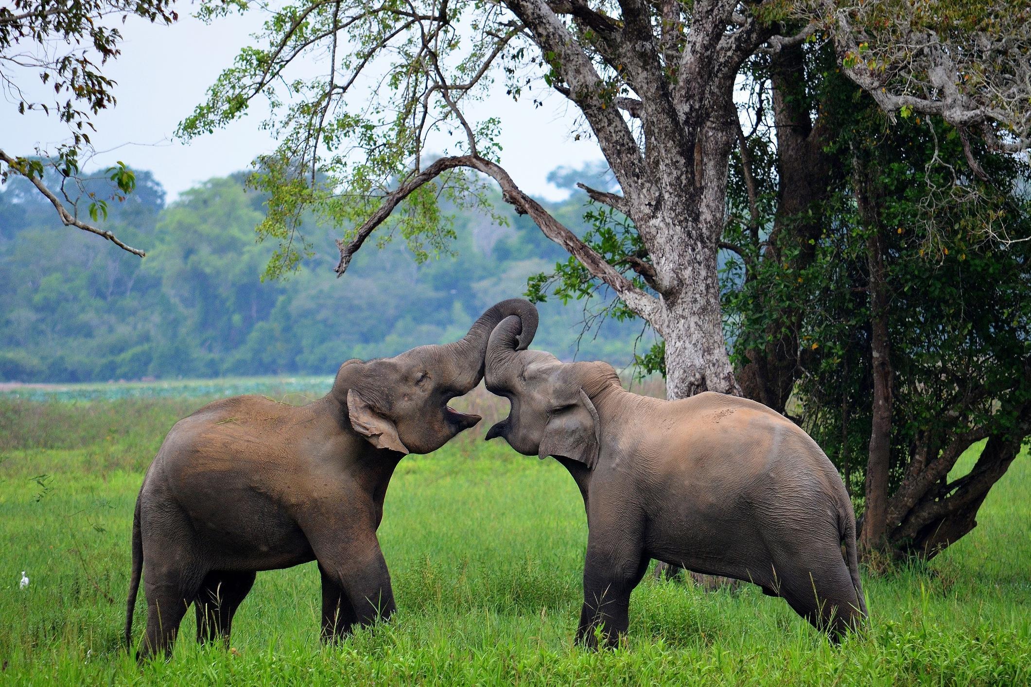 Перлите на Шри Ланка - обиколна програма - 30.04.2021 г.