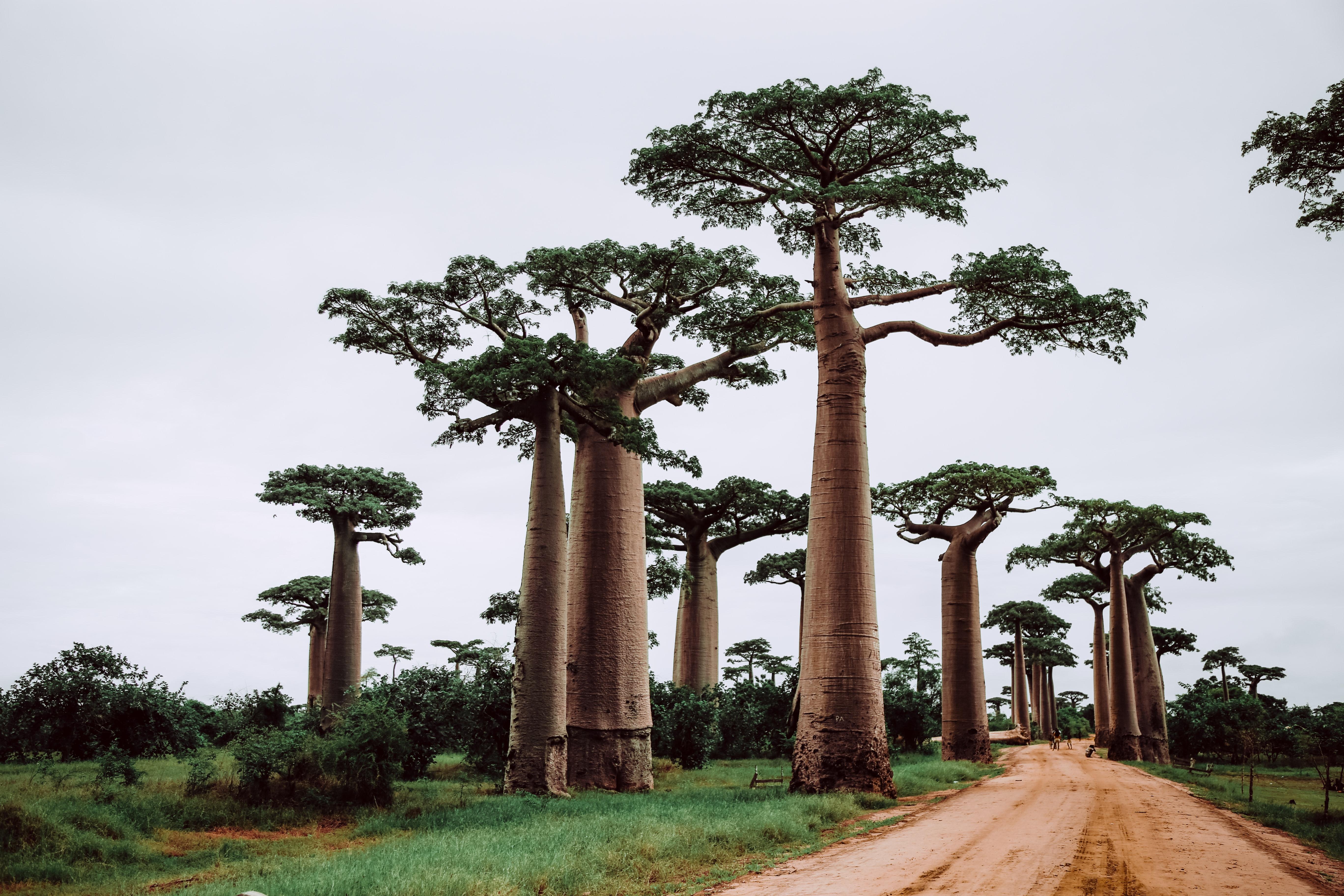 Мадагаскар: Уханието на Изтока и цветовете на Африка
