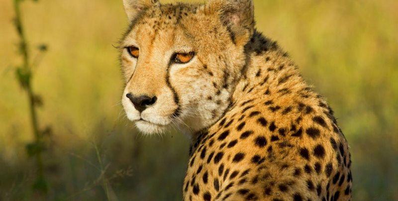 Сафари в Кения - гарантиран тур