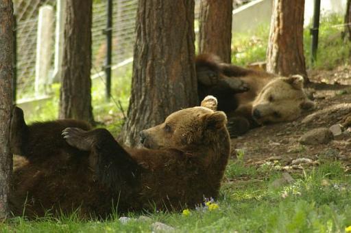 Парк на танцуващите мечки - Белица - двудневна екскурзия с автобус!