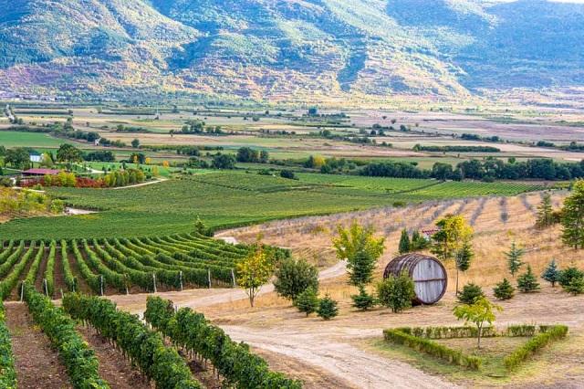 В Пловдив на вино и хапки в парка на вкусната храна - с автобус от София
