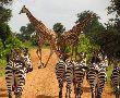 Занзибар и Танзания - докосване до дивата природа: 02.11.2019 г.