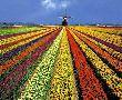 Цветна пролет 2019 в Холандия - парка Keukenhof и Амстердам