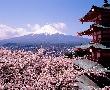 Китай - Япония по време на ханами: Драконите на Изтока
