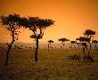 Сафари в Кения - от двете страни на екватора: 9 дни от 12.06.2018 г.