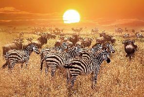 Екзотично сафари в Танзания и почивка на остров Занзибар - 02.04.2021