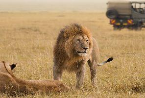 По следите на голямата петорка - Класическо сафари в Кения