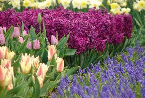 Разходка из Койкенхоф - най-голямата цветна градина в Европа!