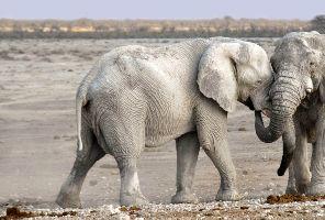 Намибия - Зимбабве: пустиня, океан и грохот на водопад