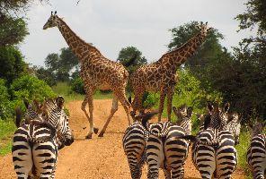 Занзибар и Танзания - докосване до дивата природа: 19.07.2020 г.г.