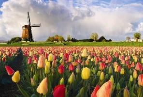 Цветен уикенд в Амстердам с полет от Варна: 07.05.2020 г.