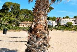 Почивка в Коста Дорада: лукс, отлична кухня + аквапарк Кариби в ПортАвентура!
