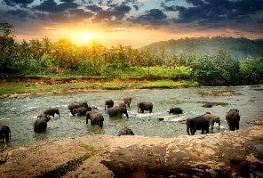 Нова година в Шри Ланка - включена новогодишна вечеря!