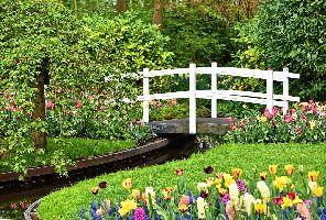 Холандия - красива цветна картичка: 5 дни от 03.05.2019 г.