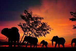 Сафари в Танзания с почивка в Занзибар - ранни записвания!