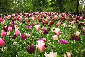 Един Цветен Уикенд в Амстердам 7-10 май