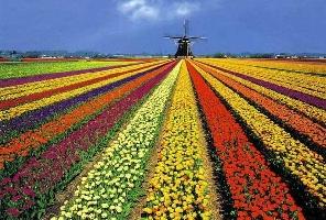 Цветна пролет 2018 в Холандия - парка Keukenhof и Амстердам