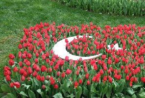 Фестивал на лалето в Истанбул 2021. Бонус посещение на парка Емирган и Одрин