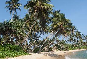 Шри Ланка - гранд тур в благословената земя - 15.12.2020 г.