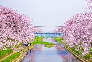 Япония: Златният път - по време на сакура: 29.03.2019 г.