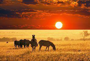 Класическо сафари в Танзания