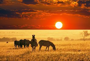 Елевана  - Луксозно въздушно сафари в Танзания