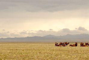 Монголия: да обичаш дивото, да усетиш тишината на Гоби - 19.05.2020 г.