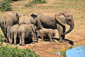 Южна Африка, Ботсвана, Зимбабве с водопада Виктория + сафари парк Крюгер