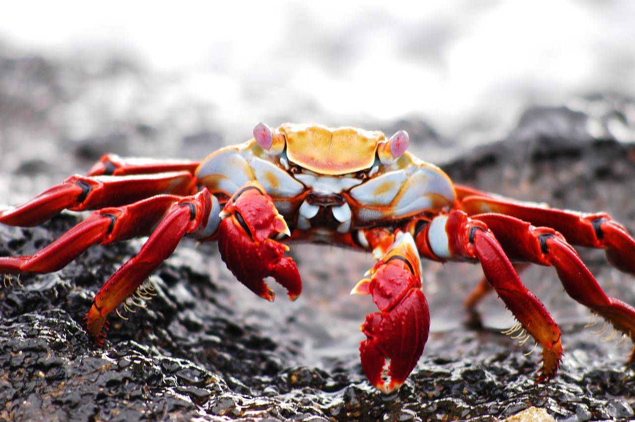 10 причини Галапагоските острови да са наистина уникално място