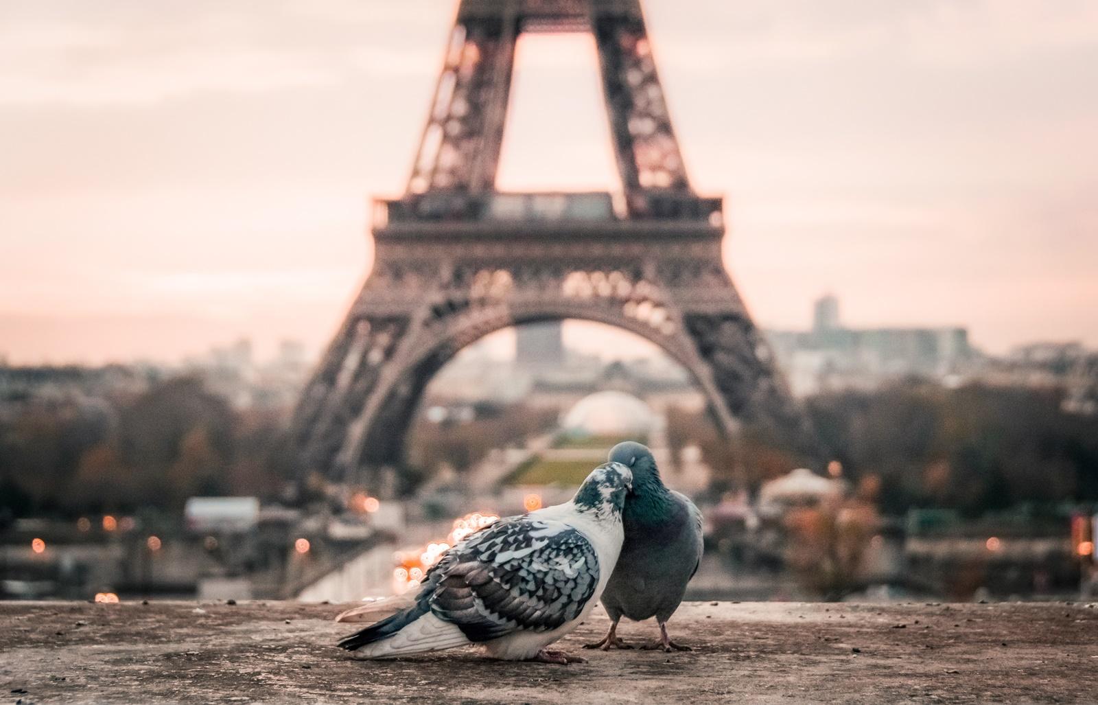 11 факта за Айфеловата кула, които вероятно не знаеш