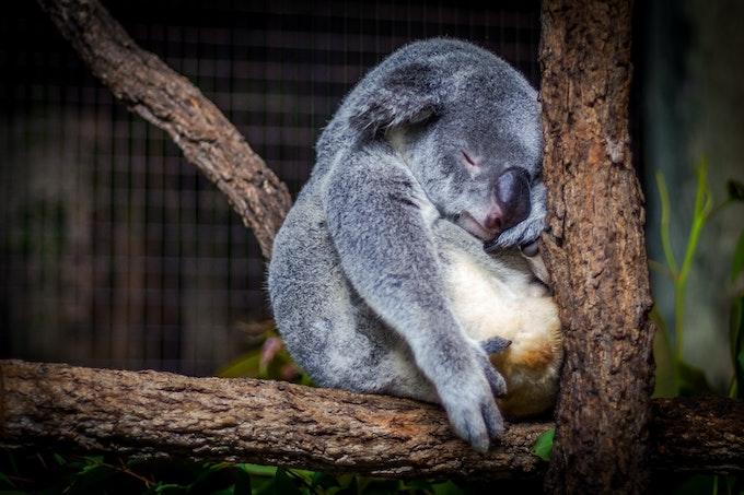 Навиците за здравословен сън