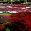 Cano Cristales – реката дъга, Колумбия