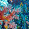 Гмуркане в Червено море - Египет