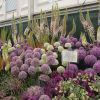 Изложбата на цветя в Челси - най-известната изложба на цветя в света