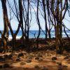 Националният парк Хавайски вулкани - природа, надминала себе си (част II)