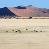 Скелетният бряг в Намибия