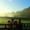 Страната на конете и курортът Маунт Джулиет