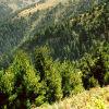 Биосферен резерват Боатин в Централна Стара планина