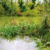 Резерват Камчия и най-голямата вековна крайречна гора в България