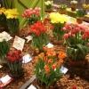 Изложението на цветя във Филаделфия - най-големият посветен на цветята празник на закрито
