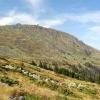 Резерват Бистришко бранище във Витоша