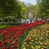 Кукенхоф – най-красивата градина с лалета в Холандия