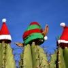 5 идеи-предизвикателства за нетрадиционна Коледа