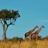 Природни паркове в Танзания за любителите на сафари