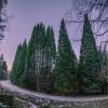 Гората от секвои при село Богослов (Кюстендил)