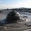 Странни забележителности: Кални вулкани в Азербайджан