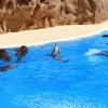 5 малки тайни на остров Тенерифе