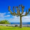 Азорски острови – топ 10 забележителности